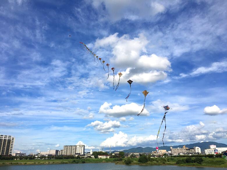 狭山池の青空へ連凧