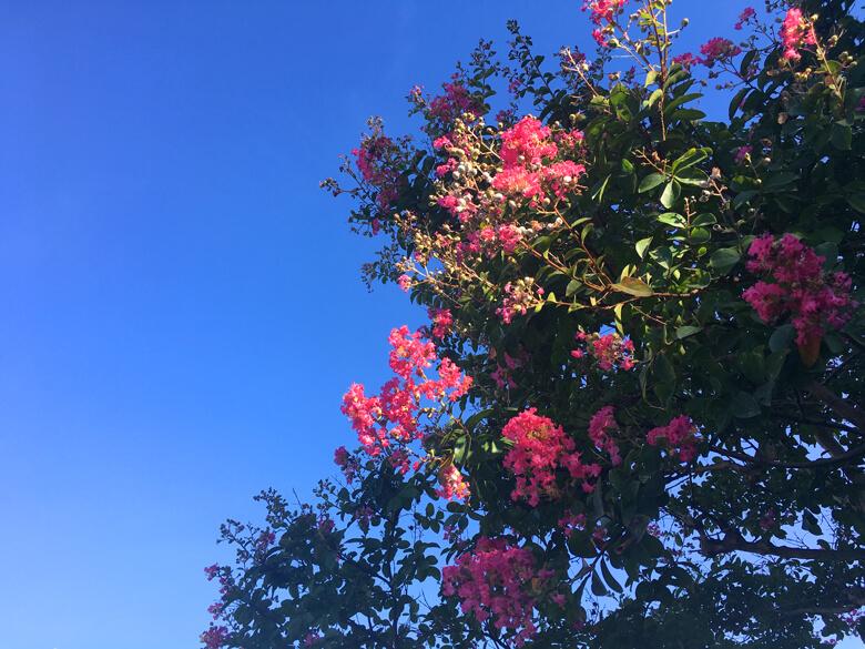 バタフライガーデンの、ピンクのサルスベリもかわいいポン♪(*゚▽゚*)