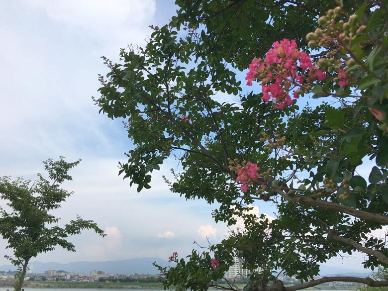 今日もバタフライガーデンのサルスベリの花がポン☆