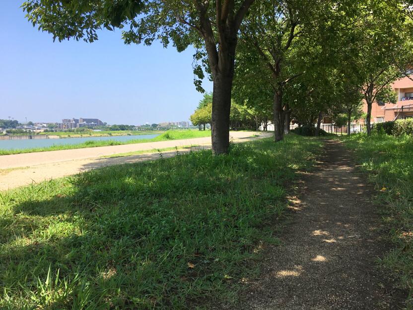 今日も木かげの道、 散歩だポ~ン☆ε=(*゚▽゚)ノ♪