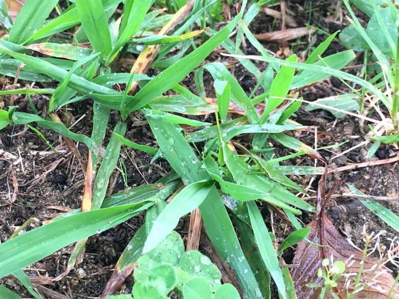 オンブバッタみっけだポーン♪(*゚▽゚*) 草と同じ色だポンよ〜☆ みんなも、見つけてポーン♪(=^▽^)σ