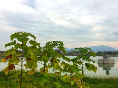 龍神社とニョキニョキの木