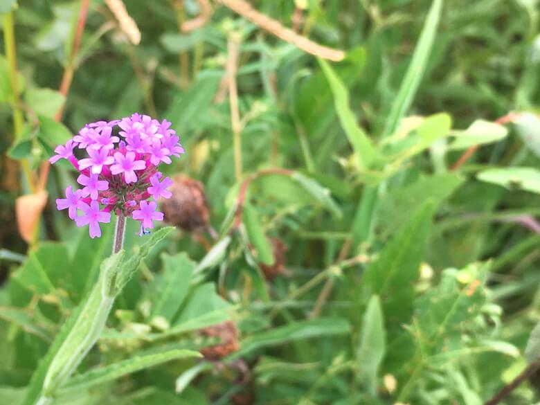 かわいい花、みっけだポン(*^ω^*)