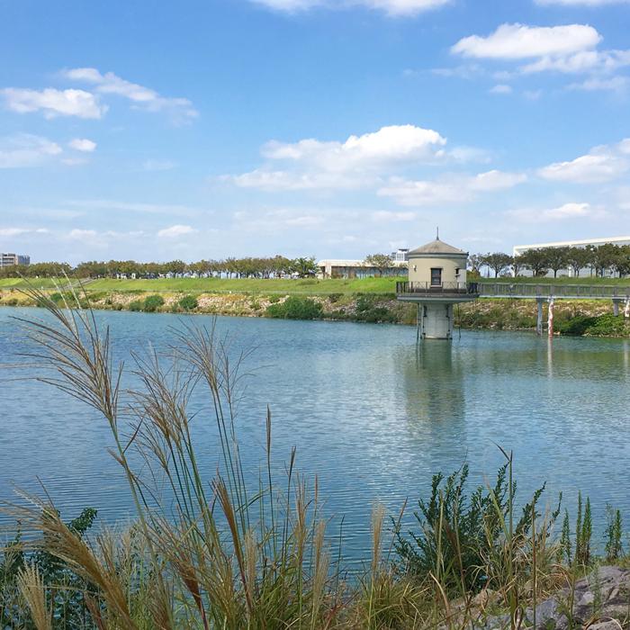 狭山池とススキ