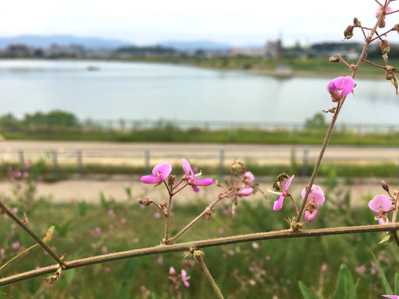 ピンクの花に、ハチがポン☆