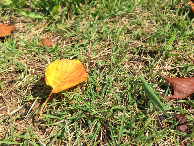 葉っぱの横に、バッタいるポンよ〜♪(*^ω^*)