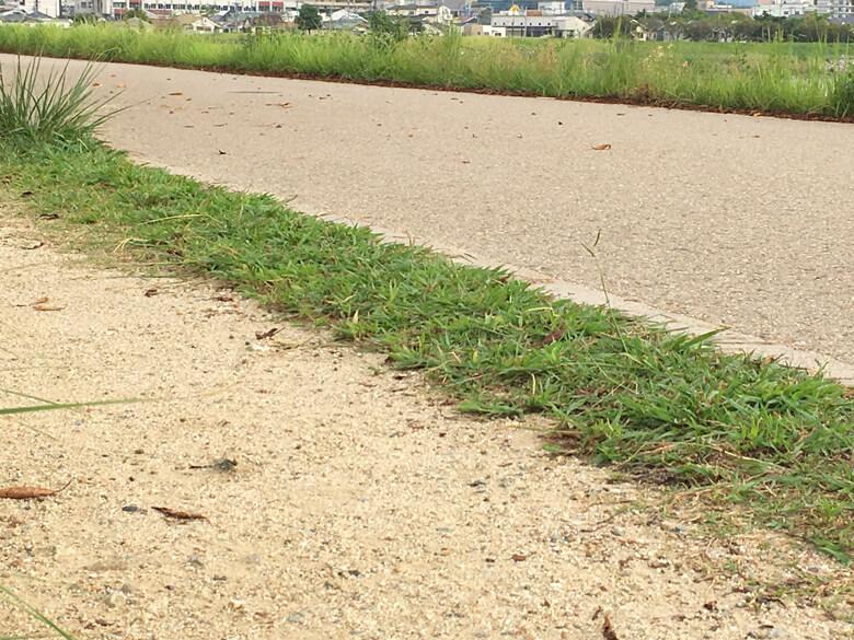 左したの、砂の道にいるポンよ〜♪(*^ω^*)