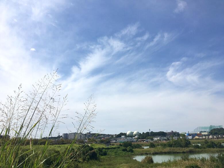 太陽ピカーン☆ 風そよそよ〜♪だポン(*^ω^*)