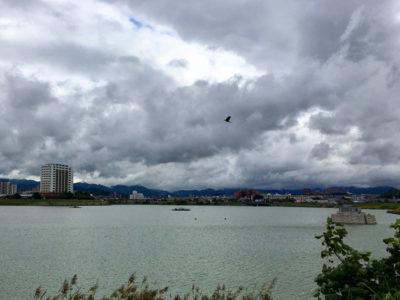 狭山池、強風の中の鳥