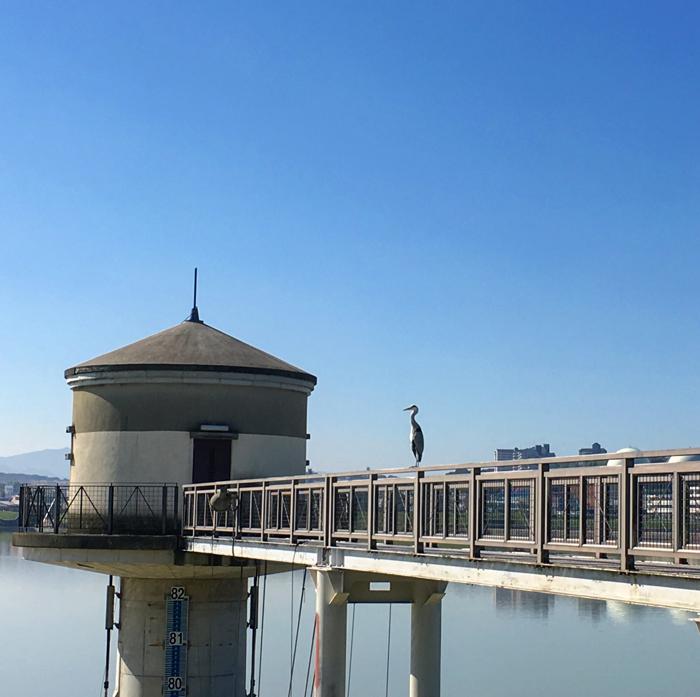 狭山池の取水塔にサギ