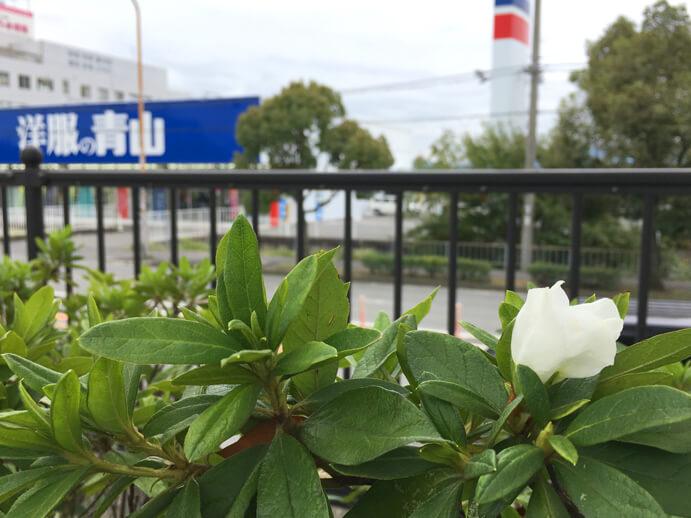 白いツツジの花も見っけだポーン♪