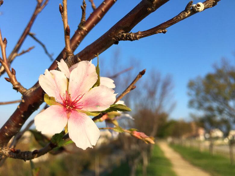 桜の花、今日もみっけだポンよ〜♪ヽ(*^ω^*)ノ♪ キレイだポーン♡(*゚▽゚*)