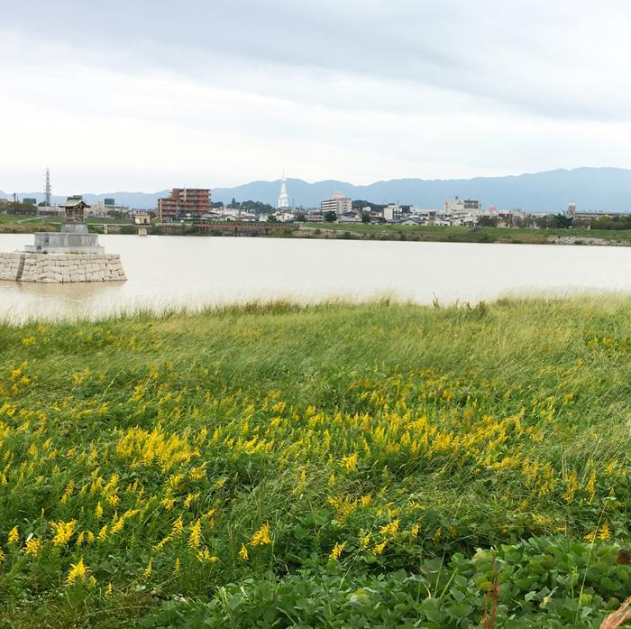 狭山池、台風あと