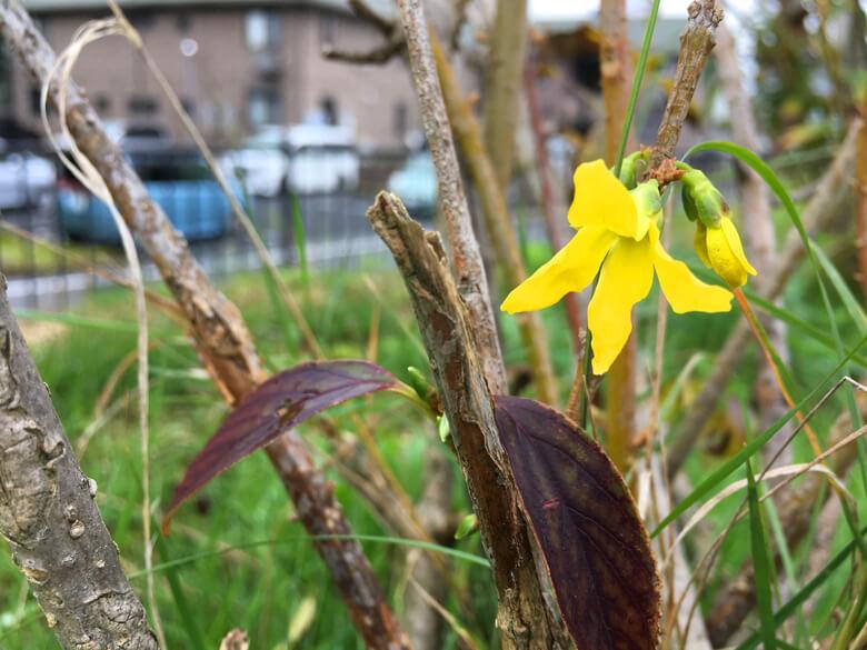 黄色い花がポン☆