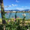狭山池のアレチヌスビトハギ