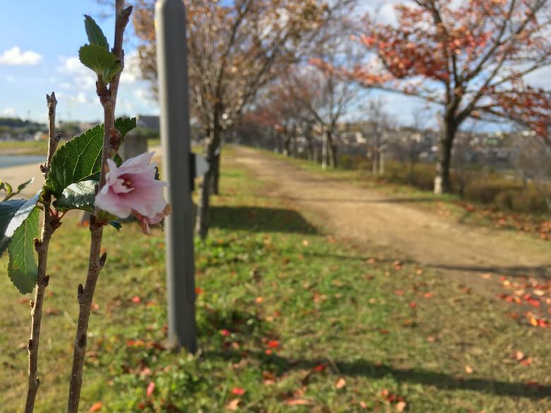 最後の桜の花びら