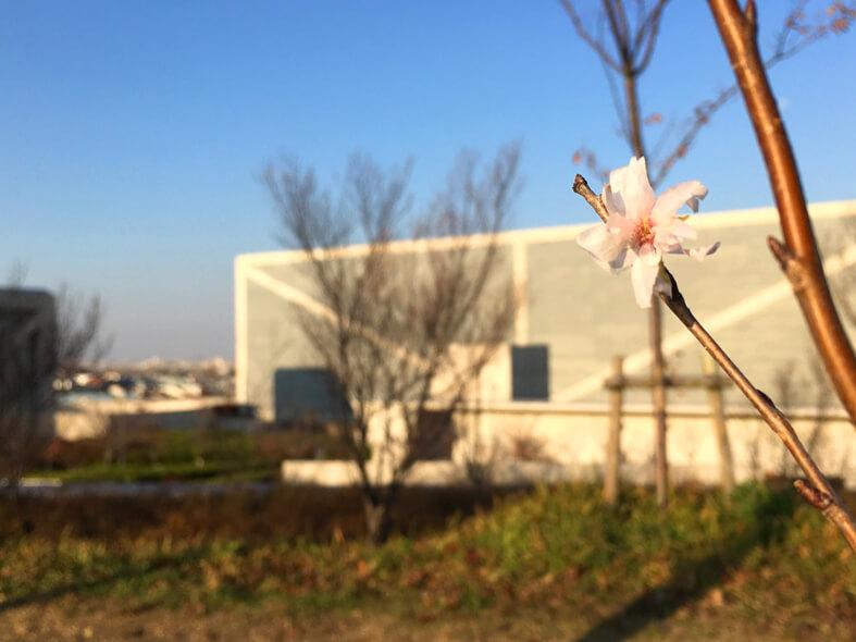 今日もキレイに咲いてるポンよ〜♪