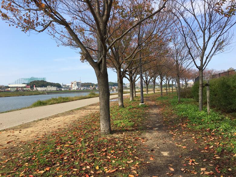 葉っぱクルクル〜♬ 風つめたいポン(・ω・;)