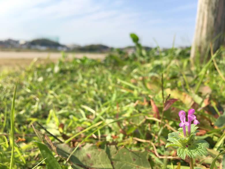 かわいい花みっけだポーン(=^▽^)σ