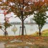秋色落ち葉の狭山池