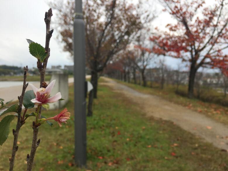 また春にキレイな花♪さかせてポン(*^ω^*)