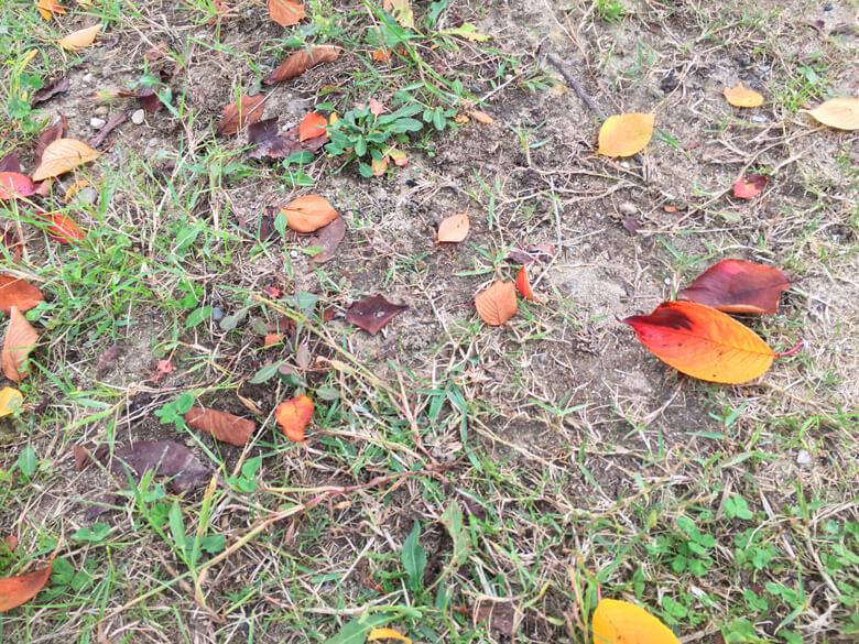 秋色の葉っぱがポン☆
