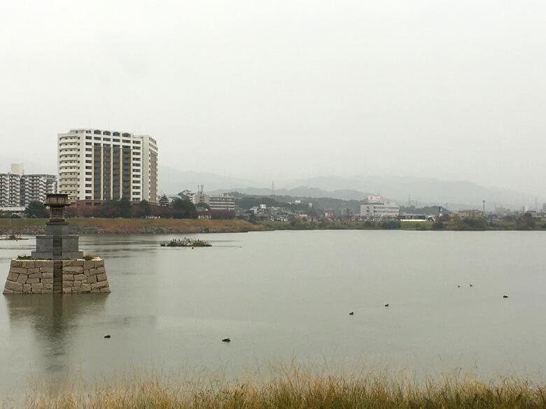雨の中、カモは元気に泳いでるポンよ〜(*゚▽゚*)