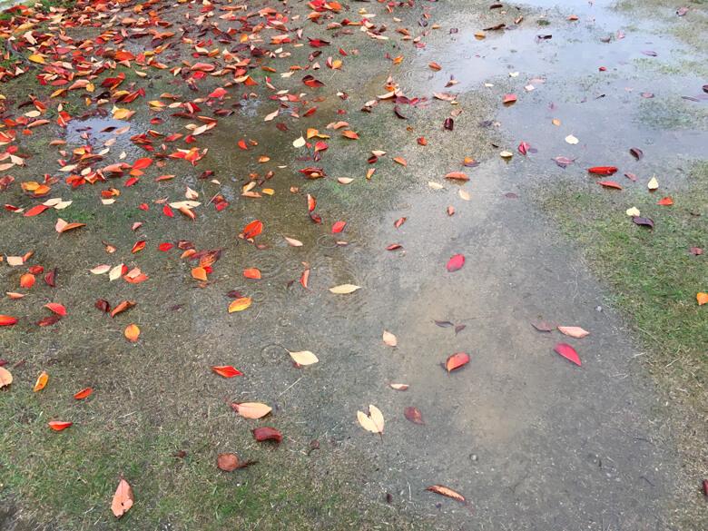 秋色の落ち葉がポン☆