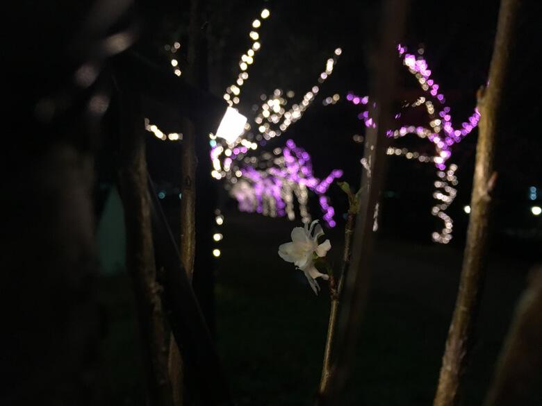 桜の花びらとイルミネーションがポン☆