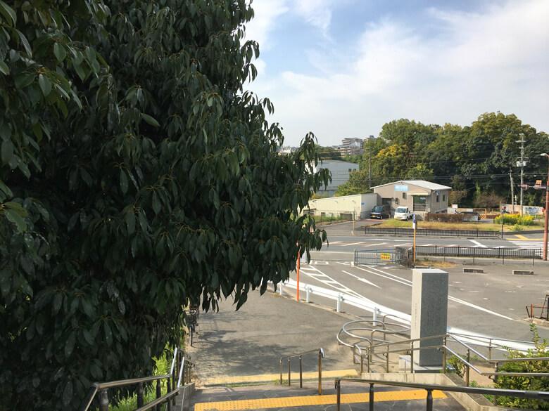 駐車場入り口のドングリの木がポン☆