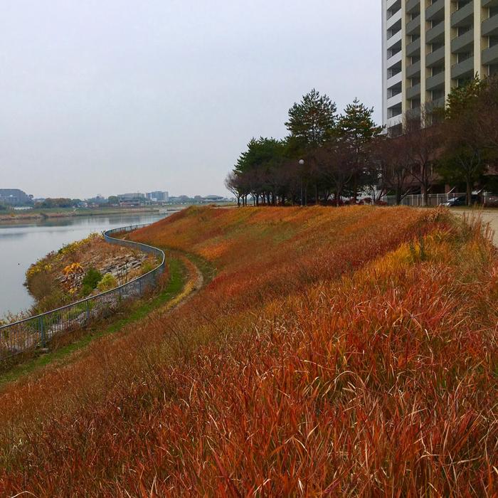 狭山池の秋の草
