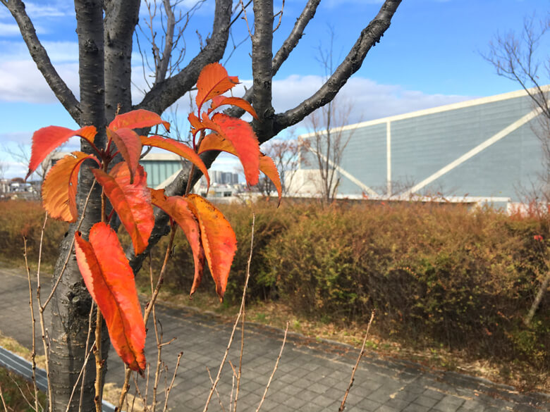 オレンジの葉っぱ♬見っけだポン(=^▽^)σ☆