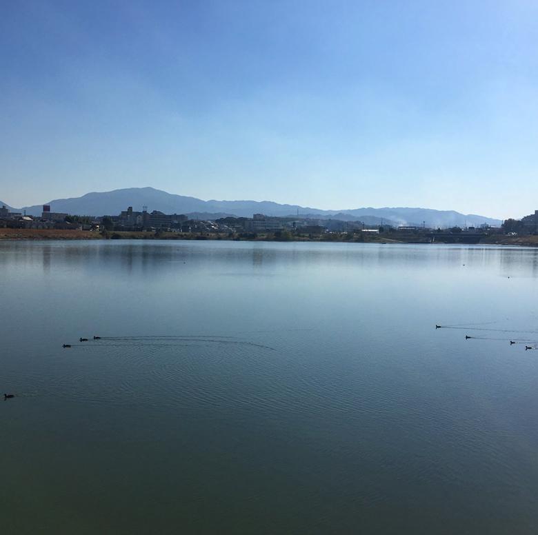 狭山池の水鳥
