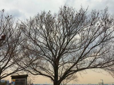桜の木にスズメ