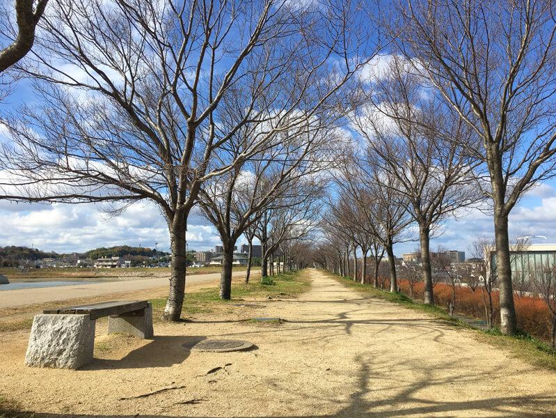 冬の桜並木だポン☆