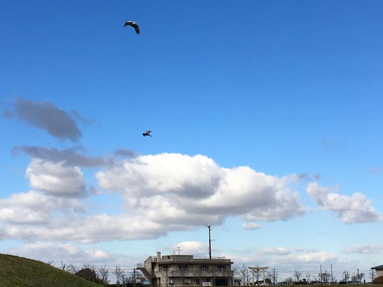風ビュービュー彡サギ、がんばって飛んでるポーン☆