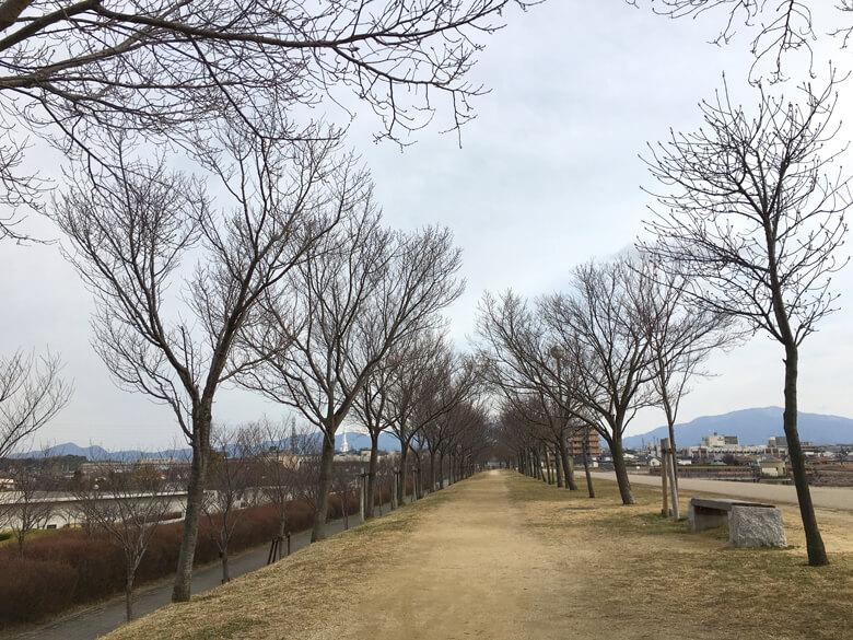 桜の木、もうキラキラコードないポンよ〜☆
