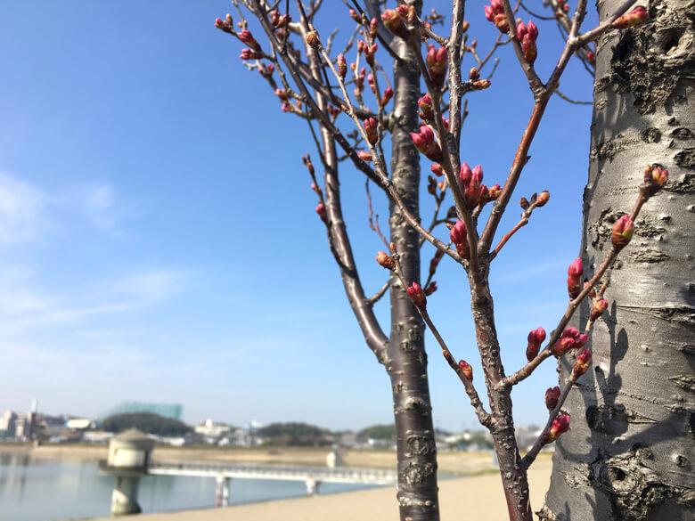 桜ぷっくりポーン☆