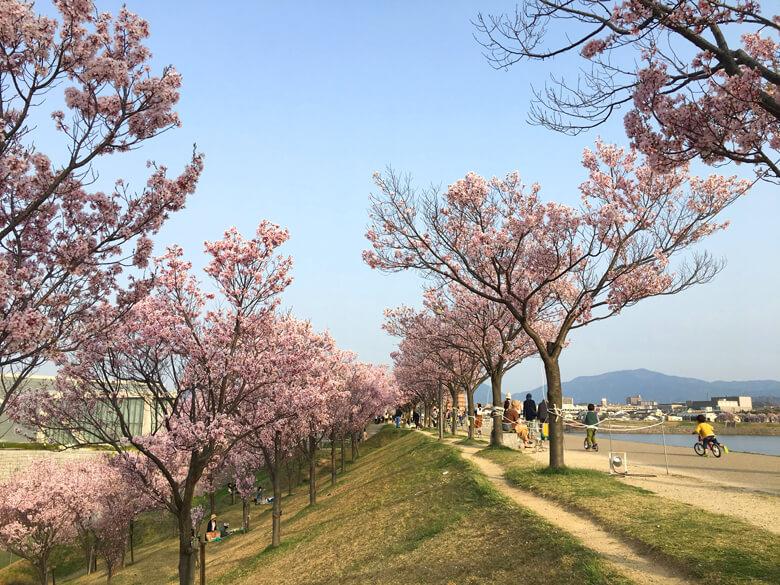 今日もたくさんのみんな♪ 桜、たのしんでるポーン☆