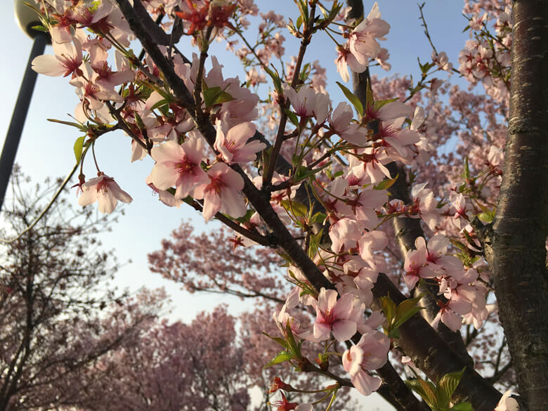 桜と葉っぱがポン♡