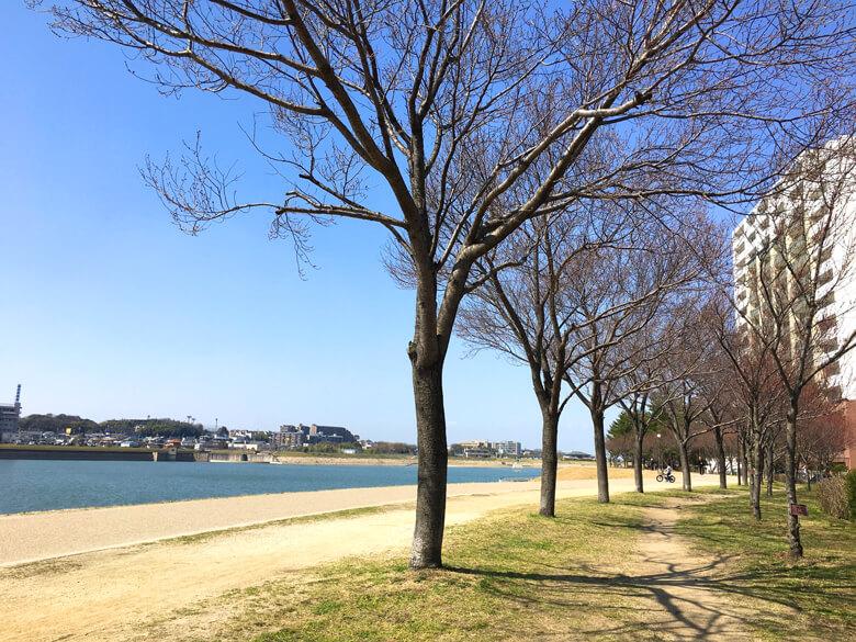 桜の木、ぷっくりピンク色♪だポンよ〜☆