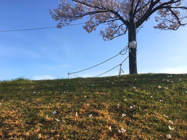桜の木と桜がポーン♡