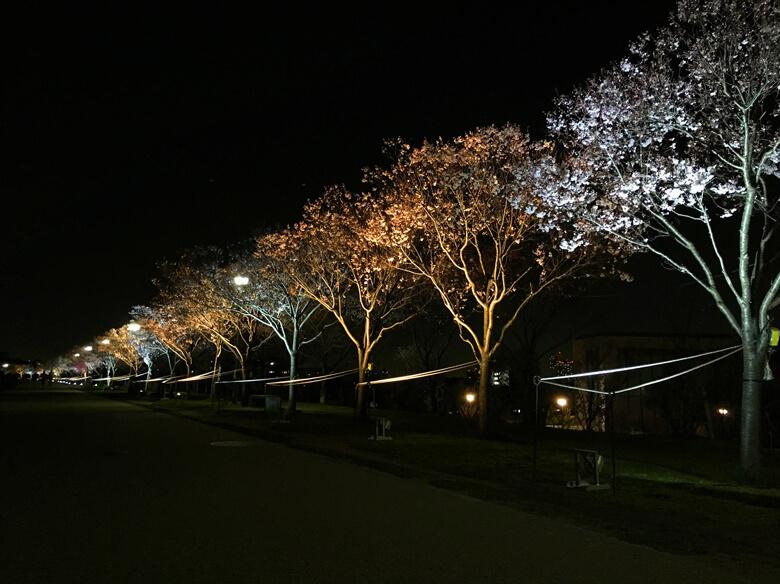 『夜桜ライトアップ』 桜キレイだポン〜♡