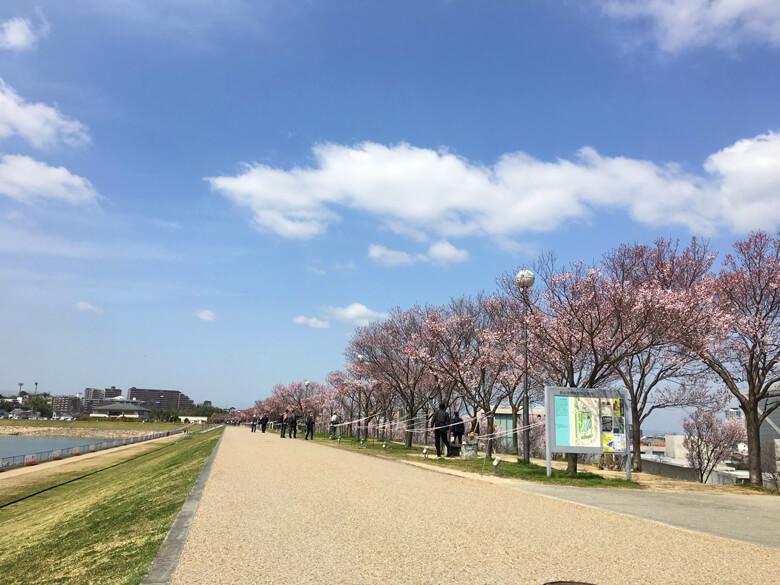 たくさんのみんな♪桜、見てるポンよ〜☆