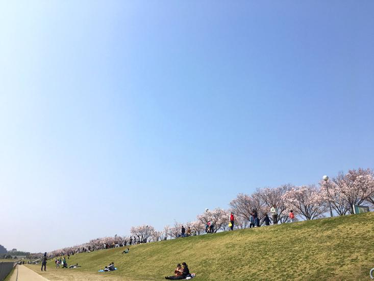 狭山池のお花見