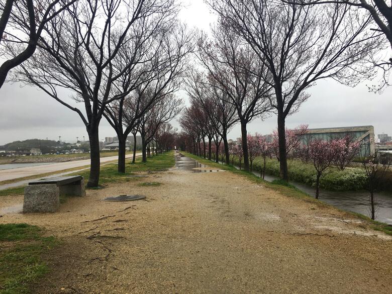 ライトアップする桜、まだぷっくり蕾だポンよ〜☆