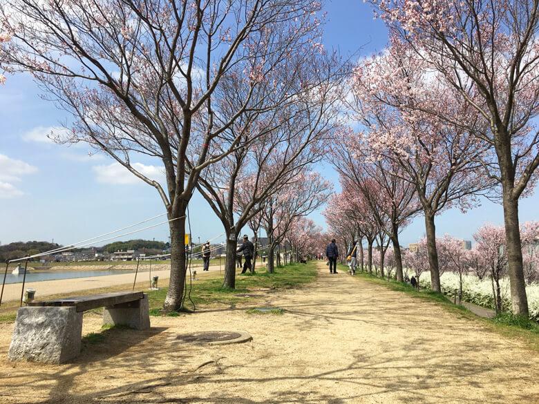 今日から『夜桜ライトアップ』だポンよ〜☆