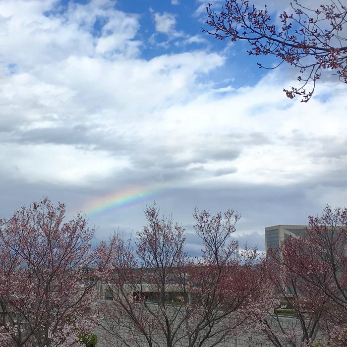 狭山池博物館と桜と虹