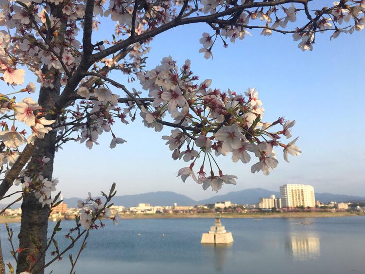 みんな桜を見ながらニコニコ♪ゆっくり散歩だポン☆