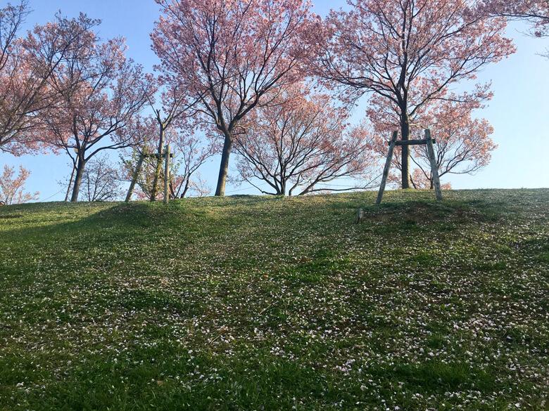 緑の草にピンクの桜、いっぱいポーン♪